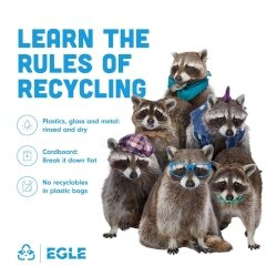 Recycling raccoons list