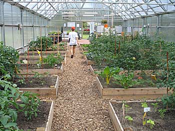 9000 Eastside Lansing Gardening Project Growing Fast