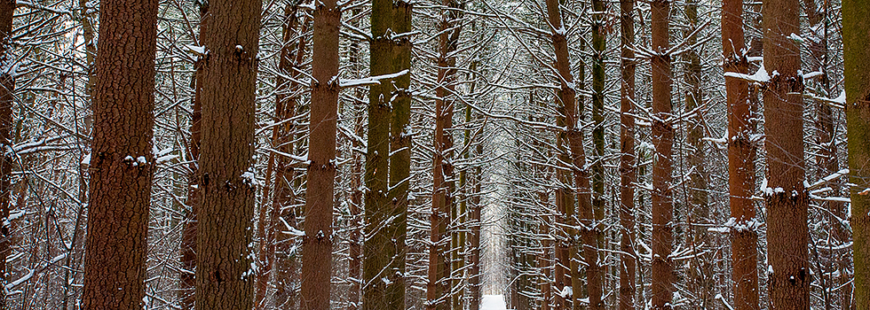 We may be getting tired of it, but it is pretty. Snowy trails at Woldumar Nature Center - Photo Dave