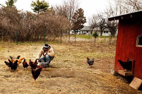 Jason Gold feeds the chickens goat milk at the Michigan Folk School