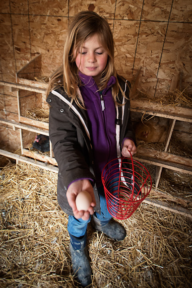 Jason Gold's daughter gathering eggs at the Michigan Folk School