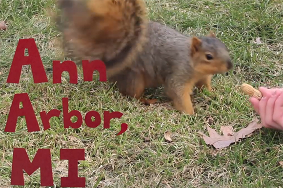 Squirrels Are Awesome video