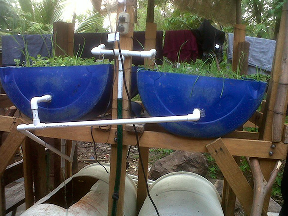 The early barrel version of the Oasis Aquaponics system