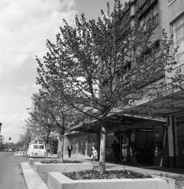 The Main Street promenade funded by Elizabeth Dean, circa 1966.