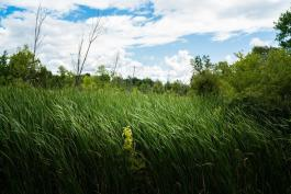 The Chippewa Watershed Conservancy protects natural habitat and open space