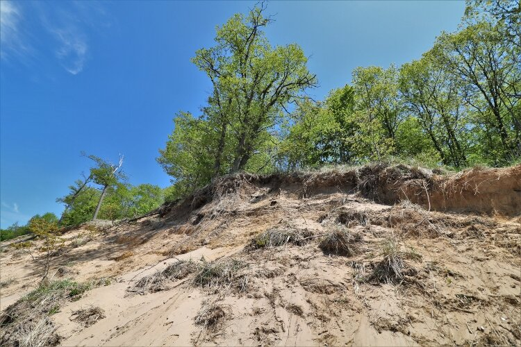 Volunteers for cleanups along the Lake Michigan shoreline must be aware of erosion dangers such as dune collapses and falling trees.
