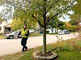 The Spring Lake Department of Public Works prepares trees for winter.