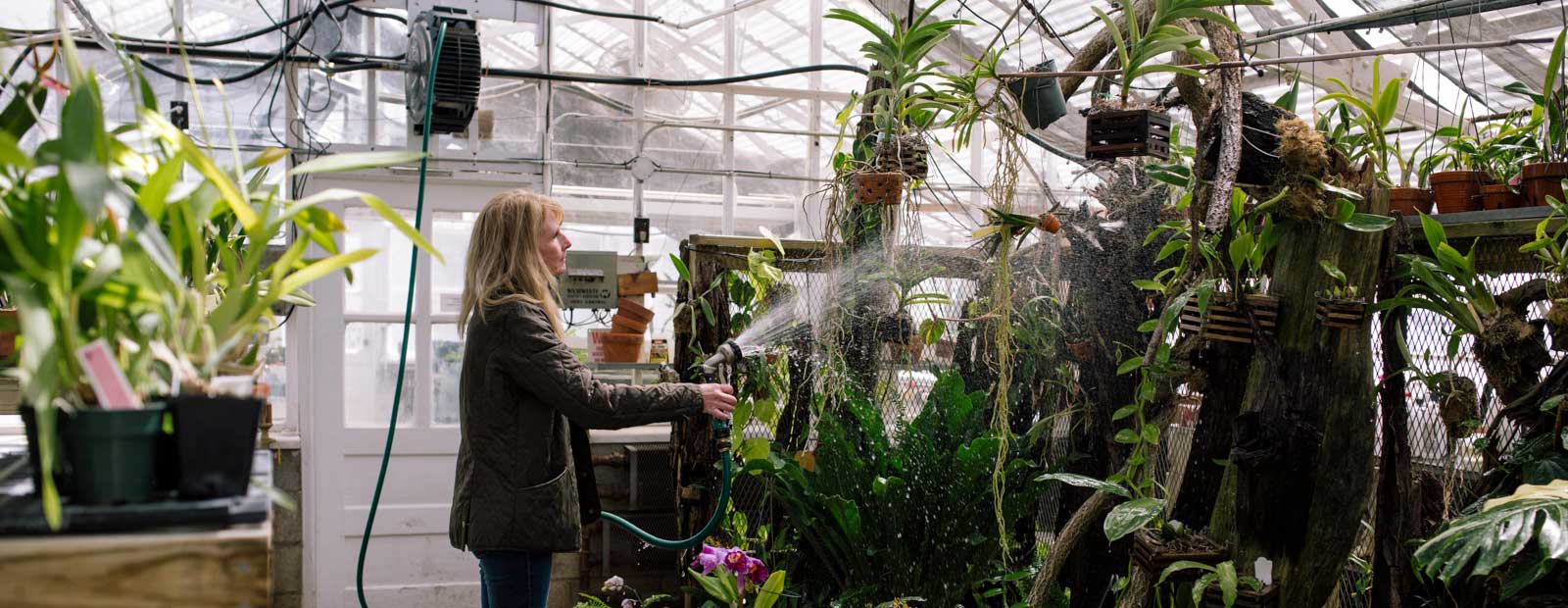 A volunteer for the Cranbrook House and Gardens, Lisa Markevich waters tropical plants in the Conservatory Greenhouse.