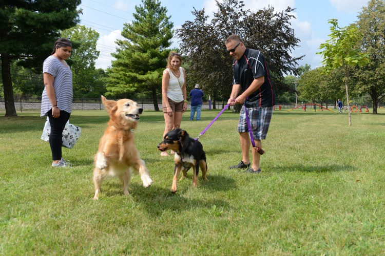 The new Dearborn dog park is located behind the Henry Ford Centennial Library and features an area for large dogs and an area for small dogs. Photo by Jessica Strachan.