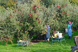 fruit-pickers-list-wikimedia-commons.jpg