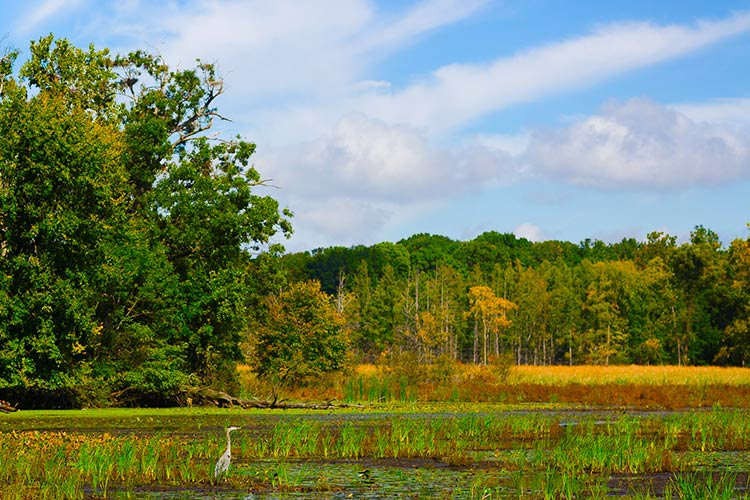 9 things to know about Oakland County's lakes
