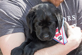 list-LeaderDogs_Logan_23-XL.jpg