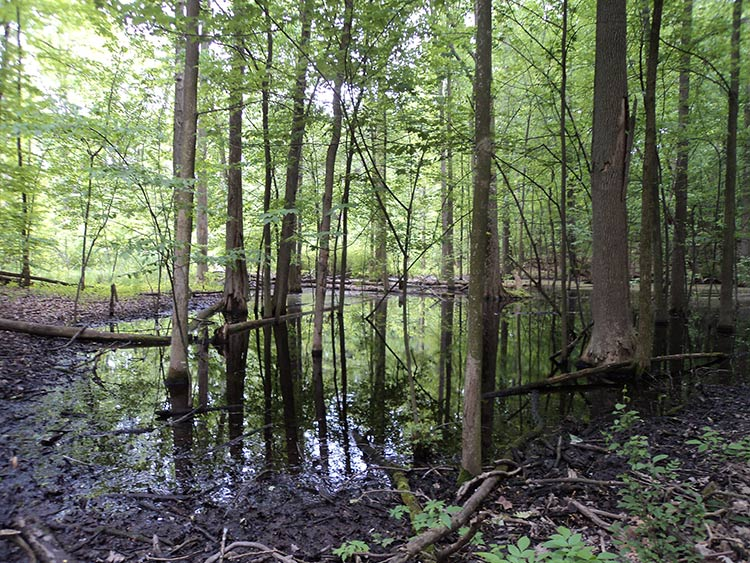Vernal pool on the Murray property in Bloomfield Township. Photo by Chris Bunch.