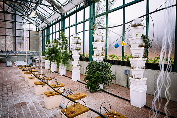You've heard about urban agriculture, but people are farming the