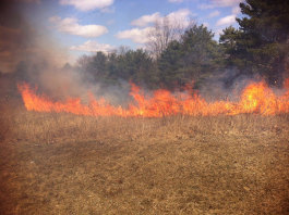 A prescribed burn at Addison Oaks County park. Photo courtesy of Oakland County Parks & Recreation.