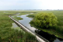 Point Pelee Marsh.