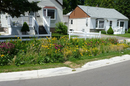 A rain garden on the street side is one way to improve the urban water cycle.