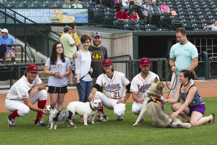 Dogs with Loons players before Bark in the Park