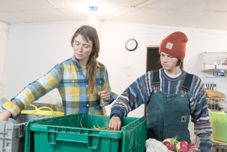 Sarah and apprentice Juila Kuhns sort produce for late fall pickup
