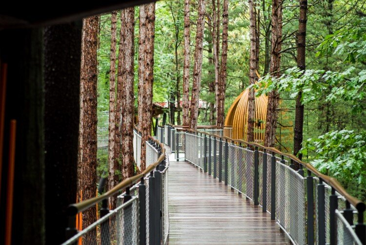 The canopy walk inside the Whiting Forest of Dow Gardens in Midland is just over ¼-mile long and is ADA accessible.