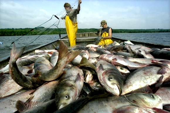 asian carp in the great lakes The issue of keeping asian carp out of the great lakes has implications for a variety of industries midwest officials are weighing a range of options, including severing the connection between the mississippi river and great lakes basins.