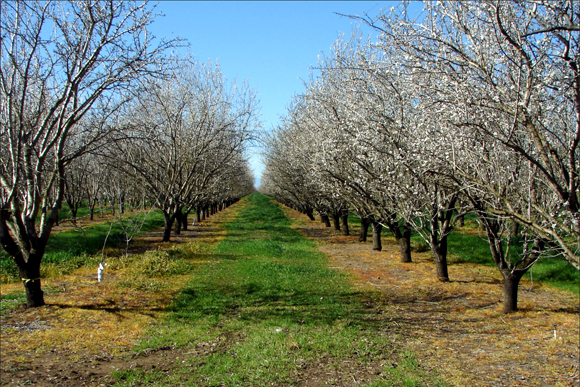 Life in an orchard: Growth, fruition and death. Repeat.
