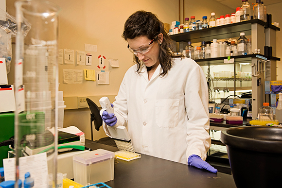 Alexandra Haase, Research Associate, prepares an ELISA assay to detect and quantify certain proteins.