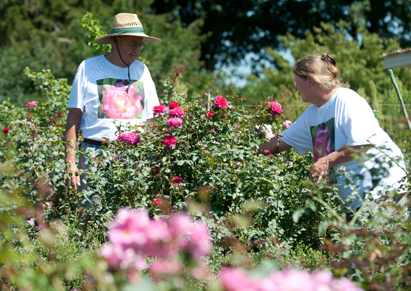 Tom, left, and Joyce Conklin pick bad buds off a rose bush at Walnut Hill Farm.
