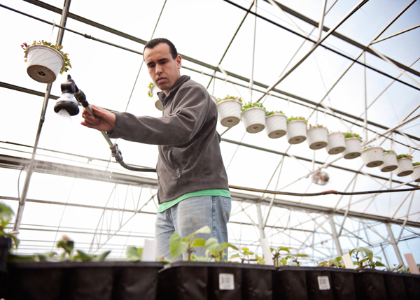 Sprout Urban Farm's employee Devon Gibson waters plants at their greenhouse in Battle Creek, Michigan.