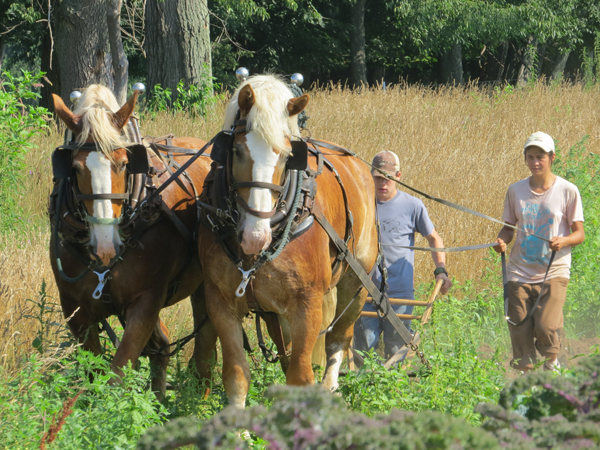 Gina Wertz, left, plows her fields with draft horses Prince and Bob.