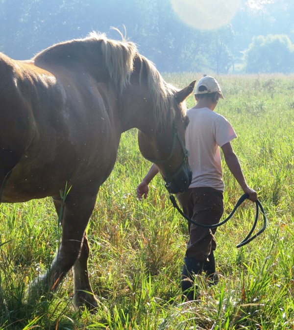 Gina Wertz walks through the field with her draft horse Prince.