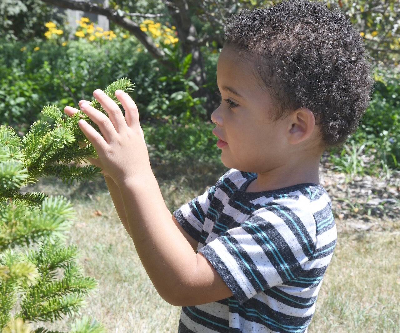 Greyson Hampton, 3, feels the needles of an evergreen tree at Leila Arboretum.