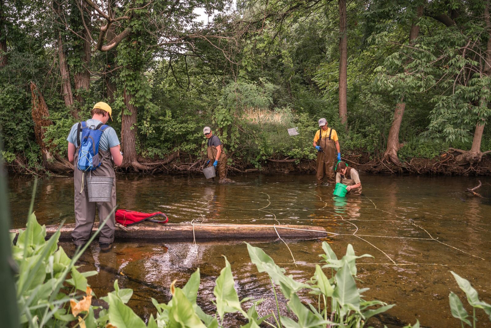 Researchers were excited to find the rare snuffbox mussel in Portage Creek as they researched wildlife as part of the development of The Mill at Vicksburg.