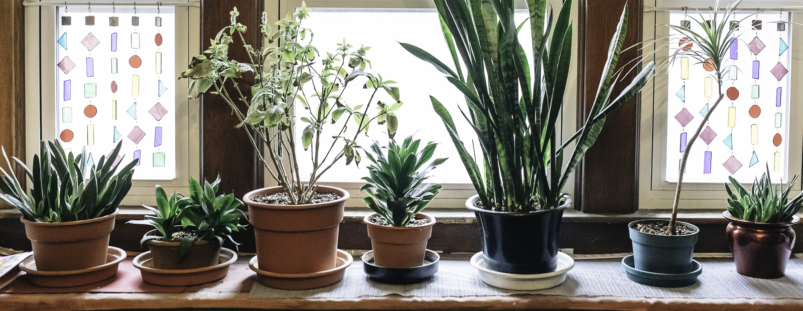 CJ Drenth has a house brimming with plants and seed catalogues. <span class='image-credits'> Eric Hennig, VAGUE photography</span>