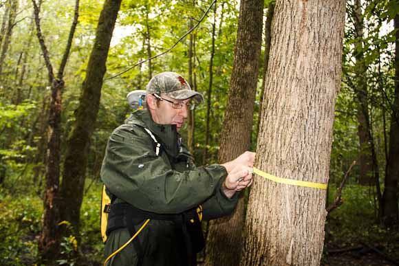 Vic Bogosian, natural resources manager measures tree