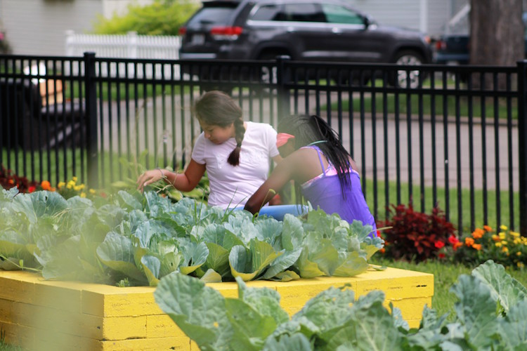 Junior Girl camp participants learn gardening