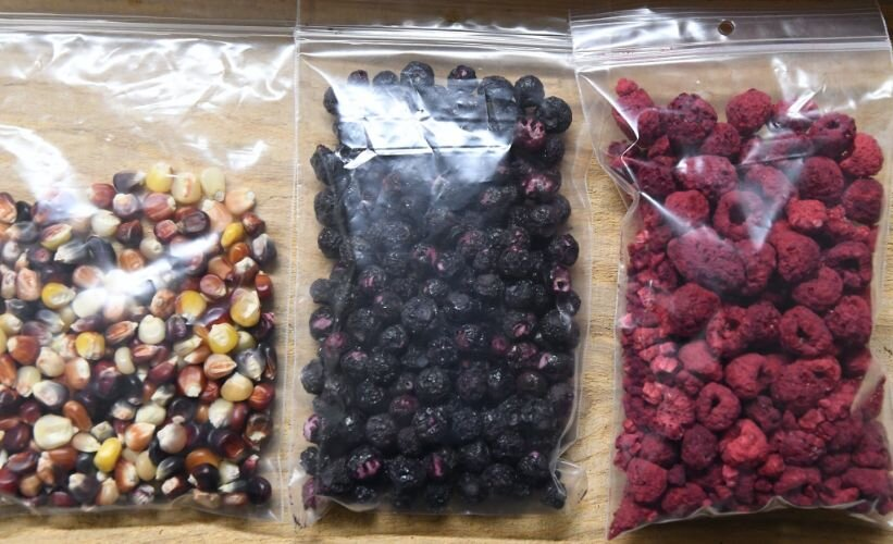 Examples of traditional foods, including cultivated Indian Corn and dehydrated examples of foraged blueberries and raspberries.