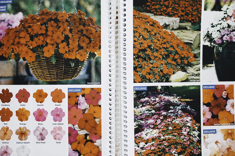 An Advanced Master Gardener, CJ Drenth has a house brimming with plants and seed catalogues.