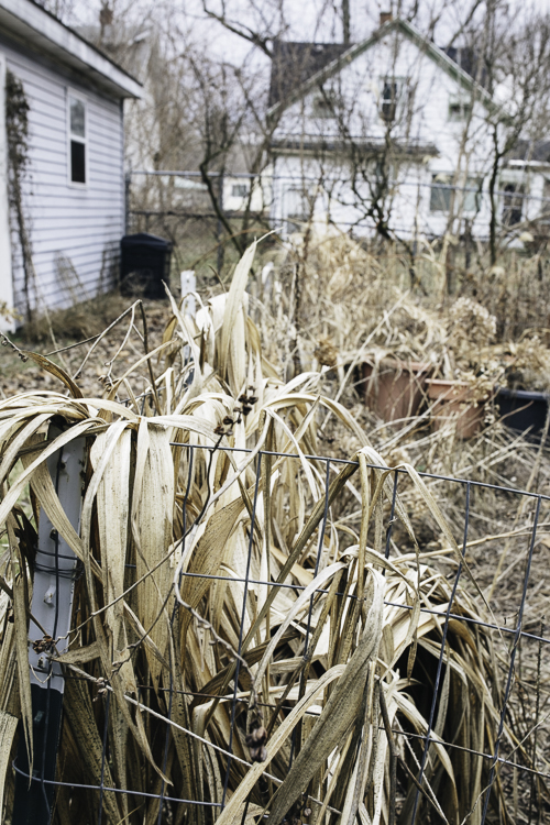 "Dormant now, CJ Drenth's lush garden will soon cover her entire yard. ""Grass is the worst ground cover there is,"" she says."