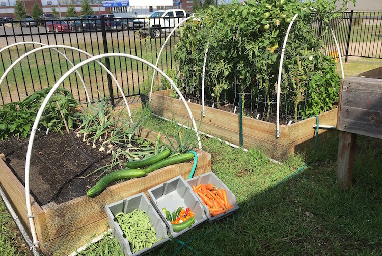 Raised garden beds are among the ways vegetables are grown at the SHARE Center garden.