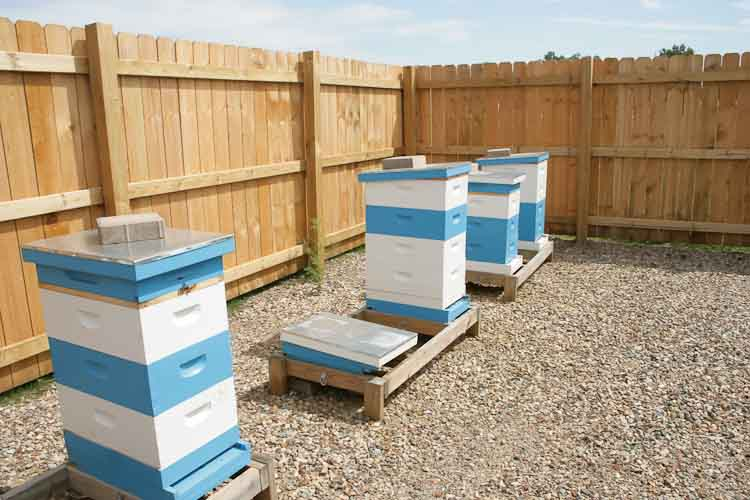 Bee hives in their own enclosure