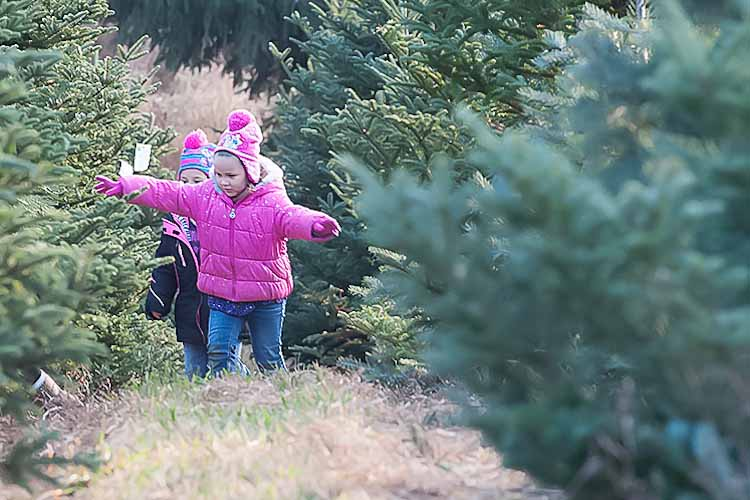 A little one enjoys the tree farm. Photo by David Trumpie