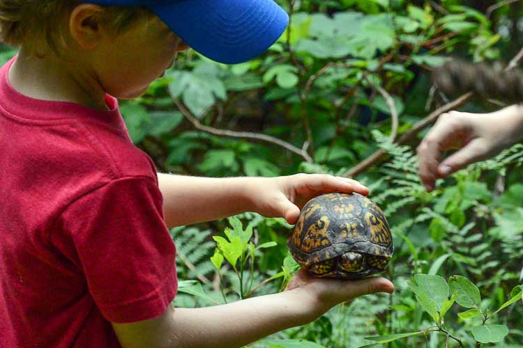 Observing a box turtle