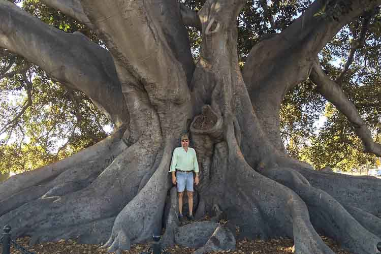 David Roberts and fig tree in California, fall of 2016.