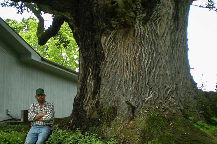 Roberts with what may have been, in 2011, the largest ash in North America, growing in Elk Rapids. Roberts has helped keep it alive in spite of emerald ash borer with injections and treatments for the past eight years.