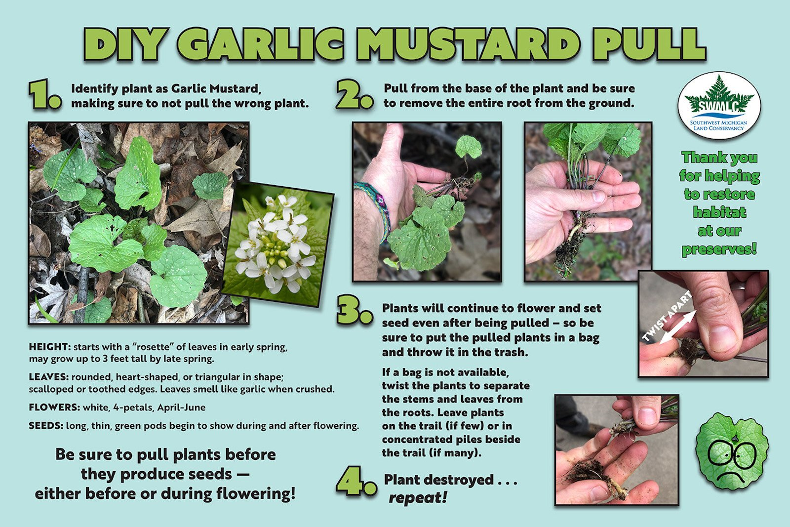 A guide on how to identify and pull garlic mustard weeds.