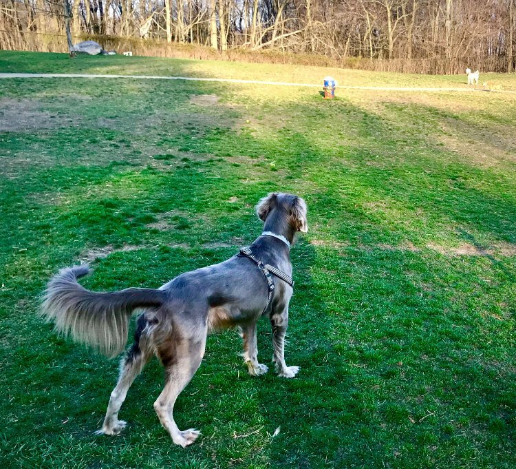 "April 3 was the first time ""Finnegan"" visited the dog park in Fairmount Dog Park in the west Douglas Neighborhood. Owner Stephen Dupuis, an Edison Neighborhood resident, said the dog park is huge compared to others in the area."