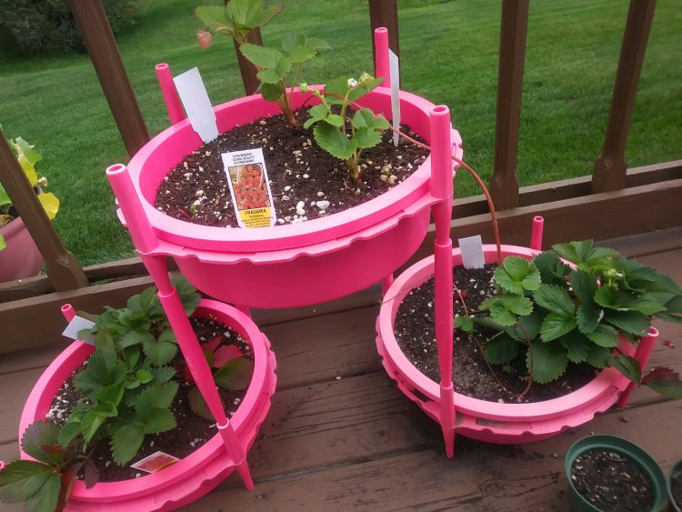 Gro-Hoops work together to create unique plantings