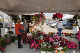 Customers check out the hanging baskets offered by vendors.