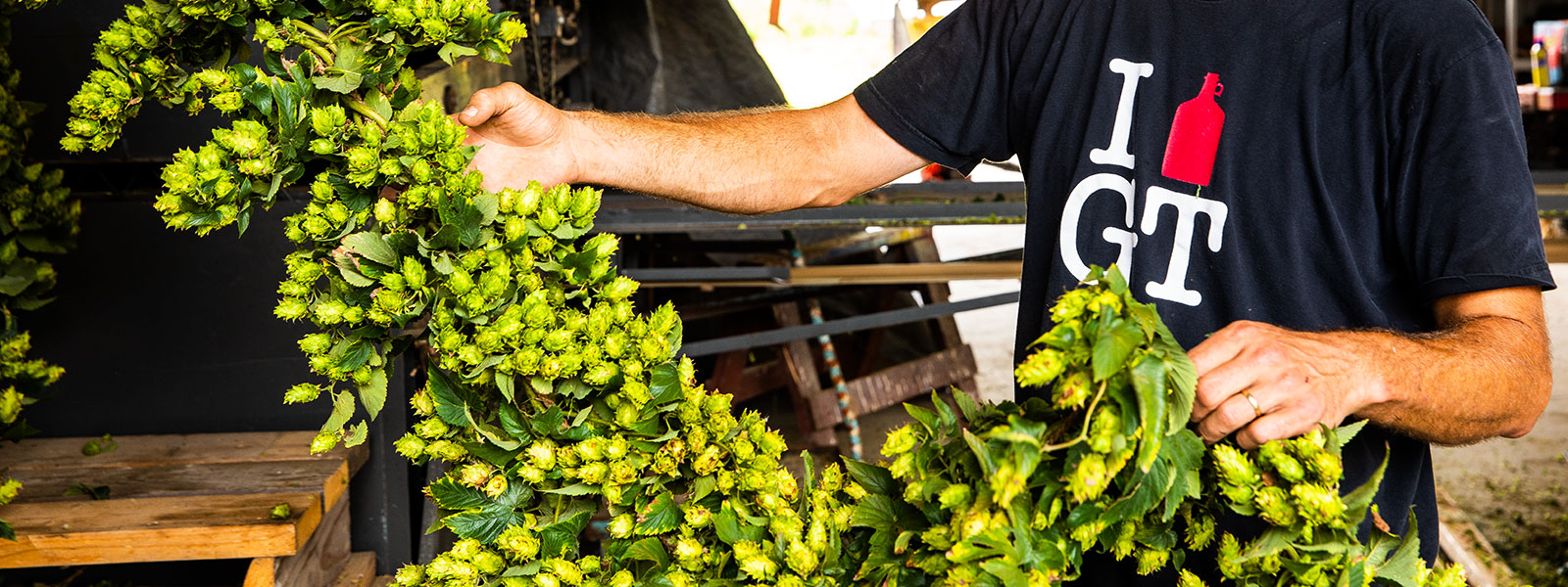 Hops farms are growing across the country.